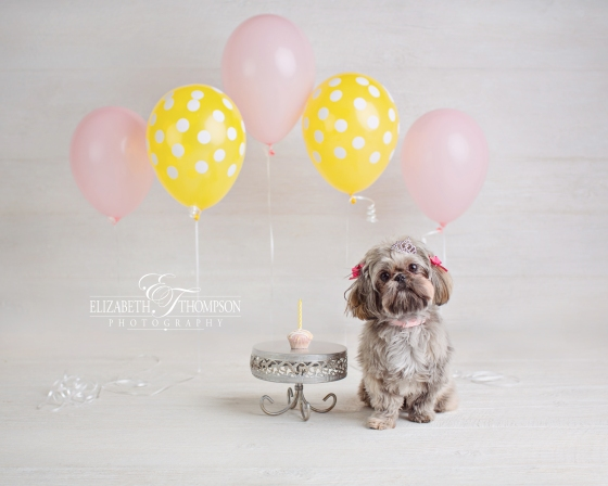 Doggy Cake Smash, puppy cake smash, Baby Photographer Clarksville, Baby Photographer Nashville