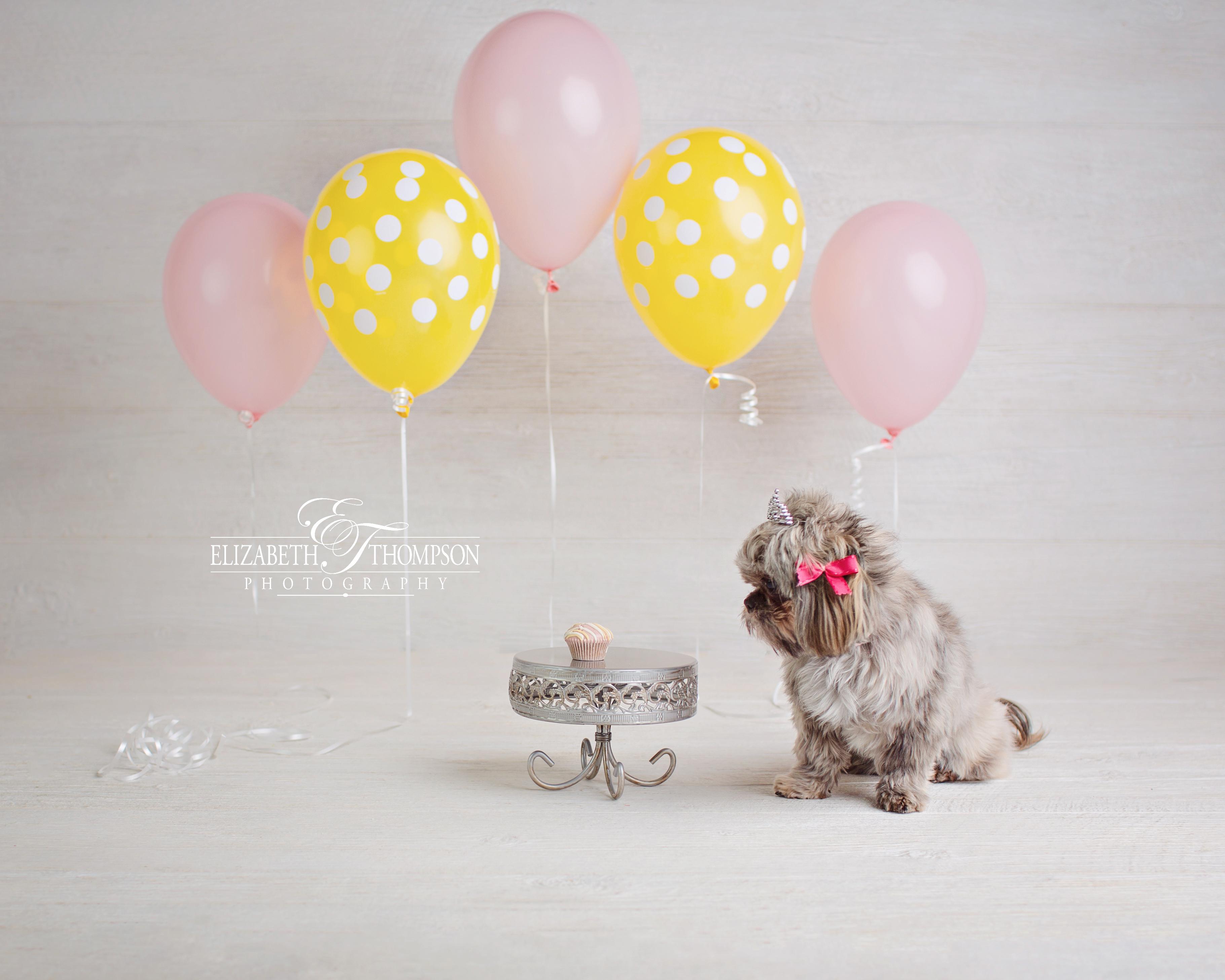 Doggy Cake Smash Puppy Baby Photographer Clarksville Nashville